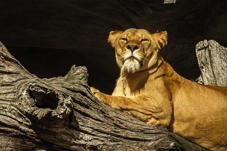 Зодия Лъв в любовта