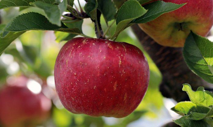 ядем ябълки всеки ден